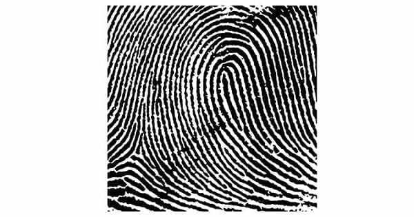 Bật mí bí mật về chủng vân tay Radial Loop - Họ có tố chất làm lãnh đạo không?