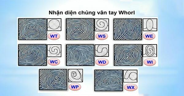 Chủng vân tay Whorl