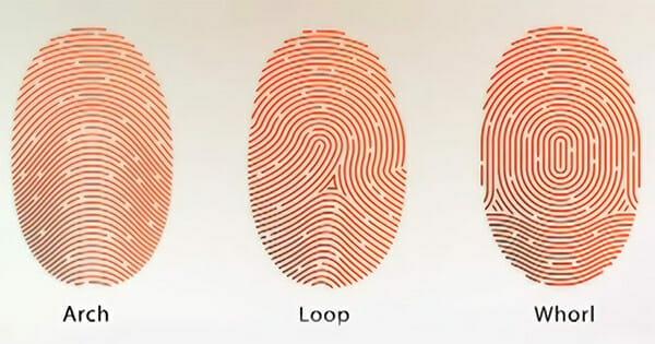 Đặc điểm của 3 chủng vân tay phổ biến