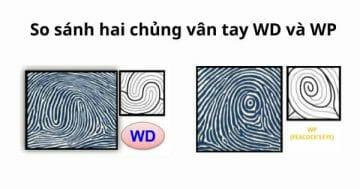 So sánh hai chủng vân tay WP và WD