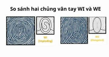So sánh chủng vân tay WI và WE