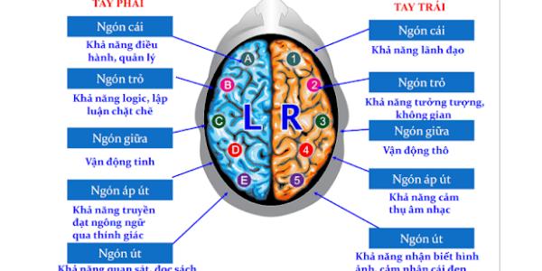 Cách hoạt động của vân tay và não bộ